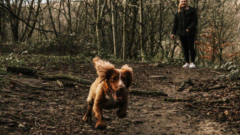 Tuckerton Dog Running