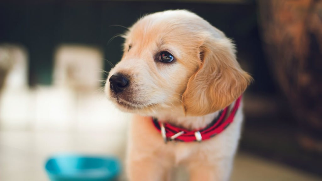 Tips For New Puppy Parents 1